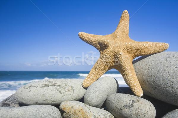 Starfish praia blue sky água mar verão Foto stock © spanishalex