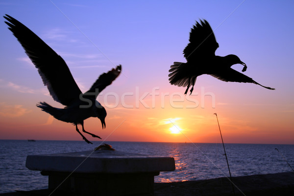 Gaivotas pôr do sol dois para baixo cortar isca Foto stock © spanishalex