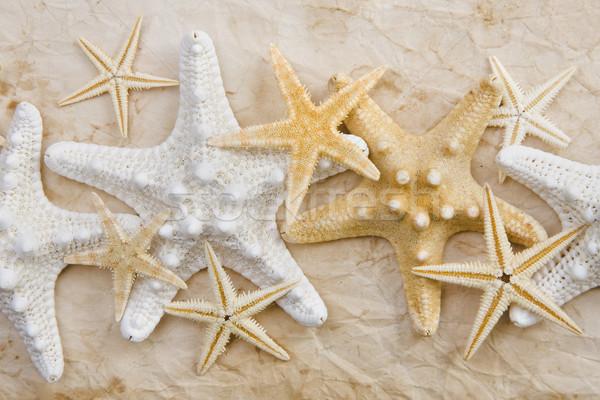 Starfish taché papier vieux papier Photo stock © spanishalex