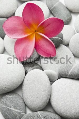 Pink Flower and Pebbles Stock photo © spanishalex