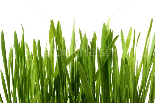 Herbe blanche golf jardin fond été Photo stock © spanishalex