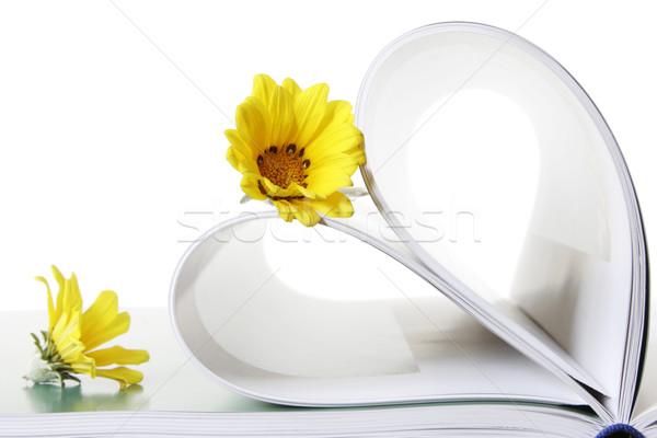 Livre fleurs deux marguerites forme de coeur Photo stock © spanishalex
