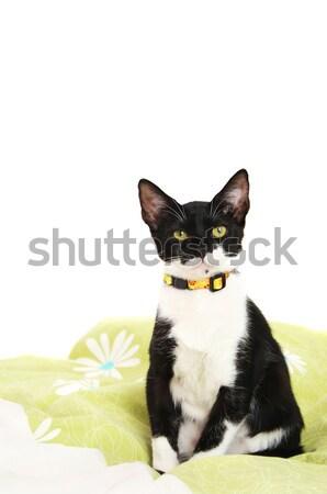 Cute котенка черно белые кошки кровать цветок Сток-фото © spanishalex
