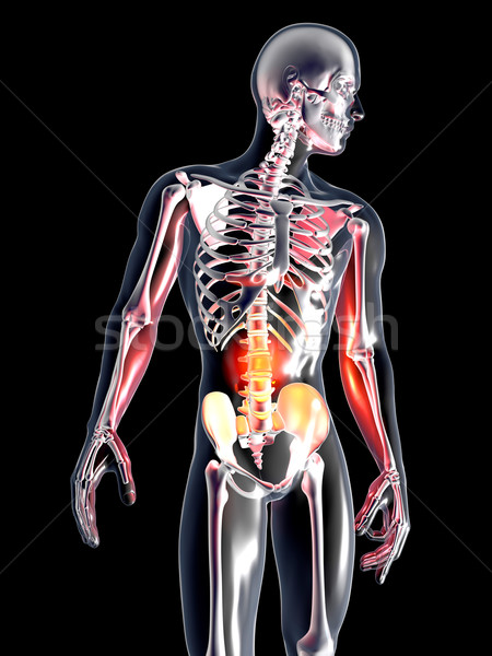 Anatomie estomac 3D rendu illustration isolé Photo stock © Spectral