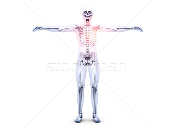 Heart Ache - Anatomy  Stock photo © Spectral