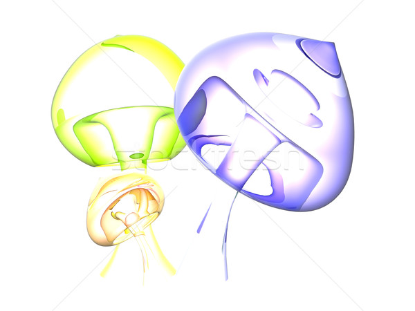 Freaky translucent Mushrooms