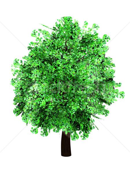 Stok fotoğraf: Ağaç · 3D · render · örnek · yalıtılmış · beyaz