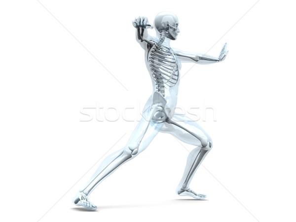 Anatomia arti marziali medici anatomia umana 3D reso Foto d'archivio © Spectral