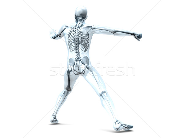 Anatomy -  Martial Arts Stock photo © Spectral