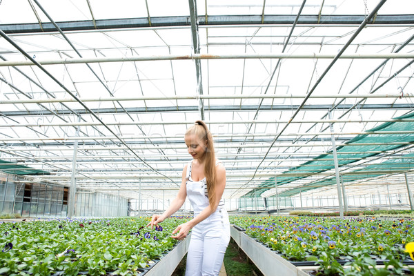 Young gardener working in a large greenhouse nursery	 Stock photo © Spectral