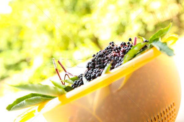 Holunder Beeren Schüssel saftig Blume Essen Stock foto © Spectral