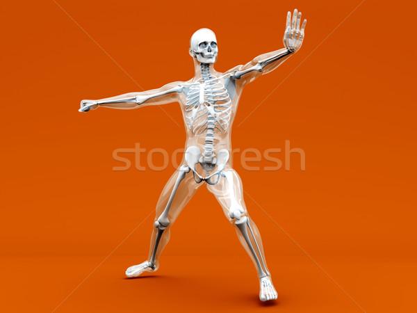 解剖 武術 医療 人体解剖学 3D レンダリング ストックフォト © Spectral