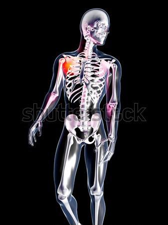 Intern 3D gerenderd anatomisch illustratie Stockfoto © Spectral