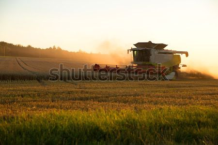 Harvest in the sunset Stock photo © Spectral