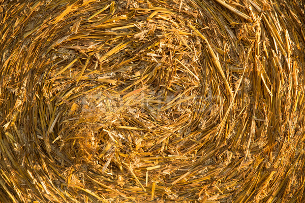 Hay bale background  Stock photo © Spectral