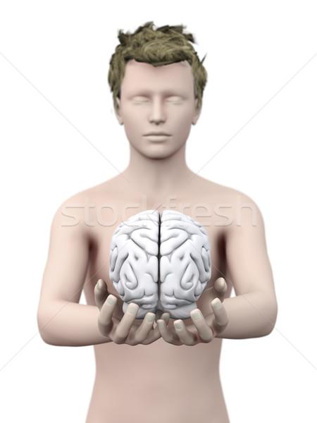 Akla beyin 3D render örnek Stok fotoğraf © Spectral