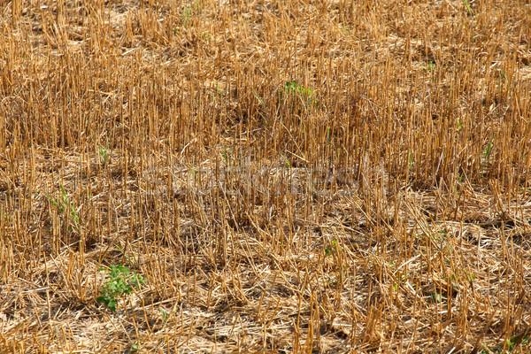 Droogte veld natuur aarde zand boerderij Stockfoto © Spectral