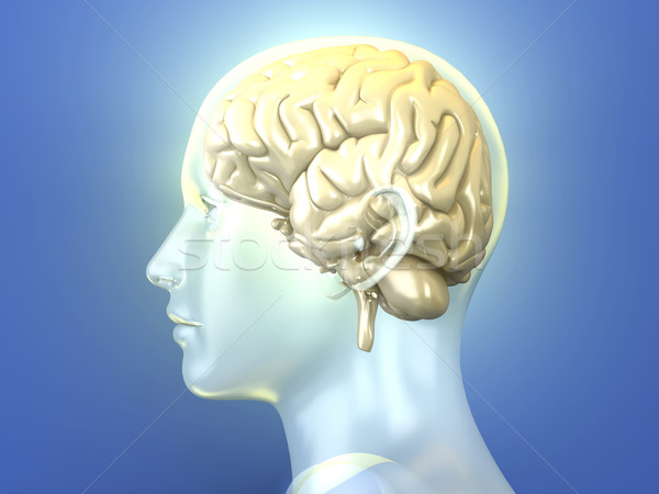 Cérebro humano 3D prestados anatômico ilustração medicina Foto stock © Spectral