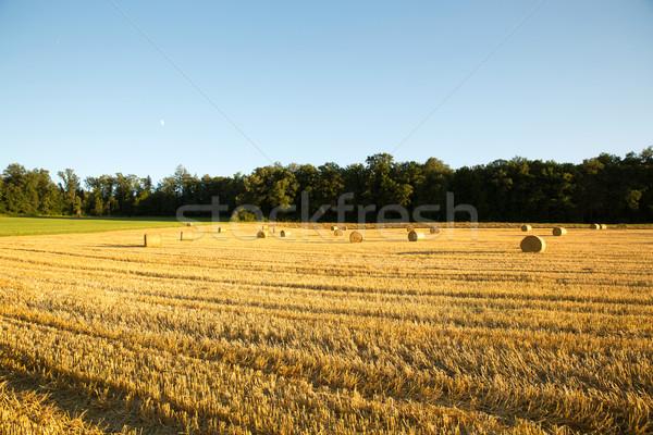 Stok fotoğraf: Akşam · hasat · gıda · doğa · arka · plan · çiftlik