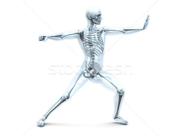 Anatomia artes marciais médico anatomia humana 3D prestados Foto stock © Spectral