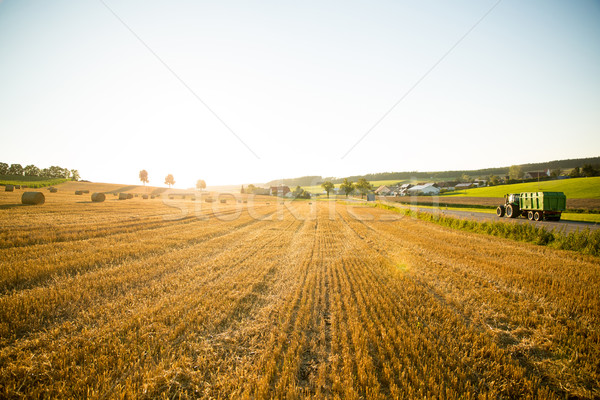 Evening after the Harvest Stock photo © Spectral