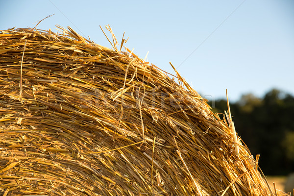 Foin bale domaine Allemagne alimentaire nature Photo stock © Spectral