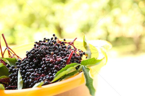 Aîné baies bol juteuse fleur alimentaire Photo stock © Spectral