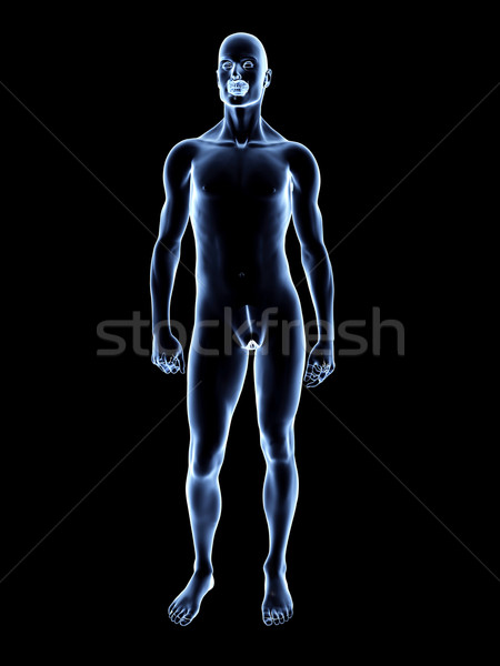 Xray Homme anatomie 3D rendu illustration Photo stock © Spectral