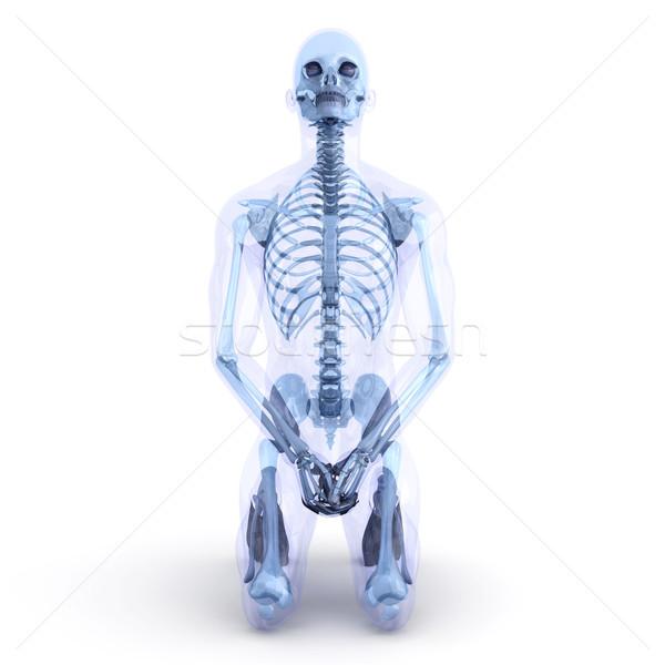 Sitting Anatomy  Stock photo © Spectral