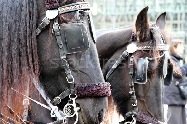 Fuvar lovak Berlin Németország ló állat Stock fotó © Spectral