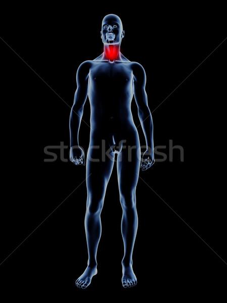 Torokfájás anatómia orvosi illusztráció 3D renderelt Stock fotó © Spectral