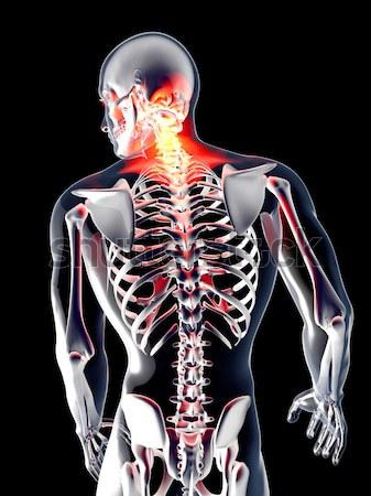 Interno 3D prestados anatômico ilustração Foto stock © Spectral