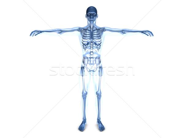 анатомии медицинской 3D оказанный иллюстрация Сток-фото © Spectral