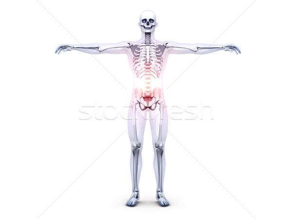 Belly Ache - Anatomy  Stock photo © Spectral
