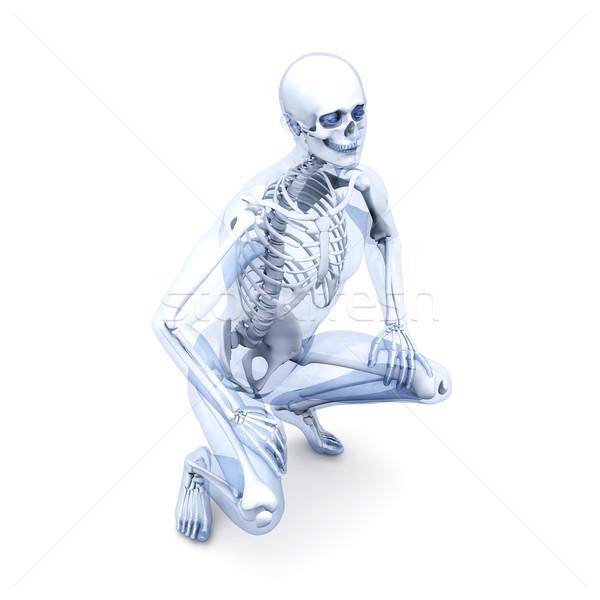 解剖 医療 人体解剖学 3D レンダリング 実例 ストックフォト © Spectral