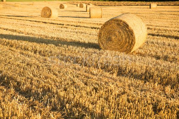 Fieno campo Germania alimentare natura farm Foto d'archivio © Spectral