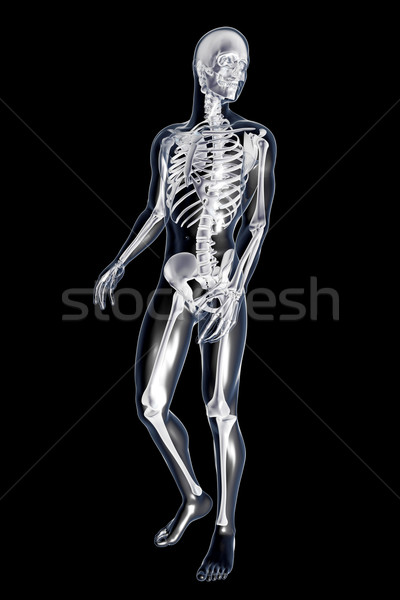 Male anatomy	 Stock photo © Spectral