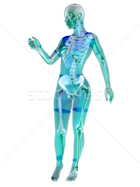 Foto stock: Feminino · anatomia · ilustração · 3d · isolado · branco · corpo