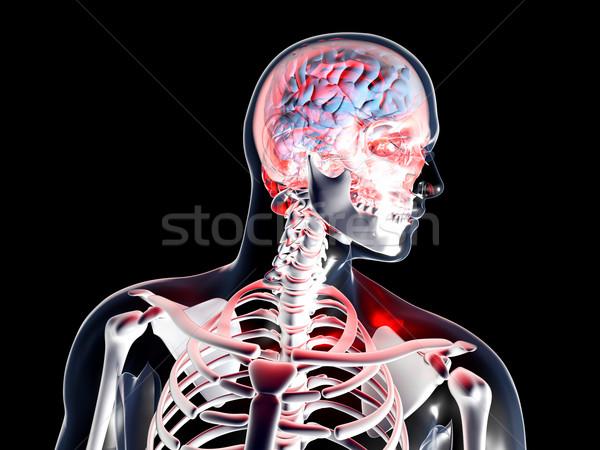 Stockfoto: Anatomie · hoofdpijn · depressie · 3D · gerenderd · illustratie
