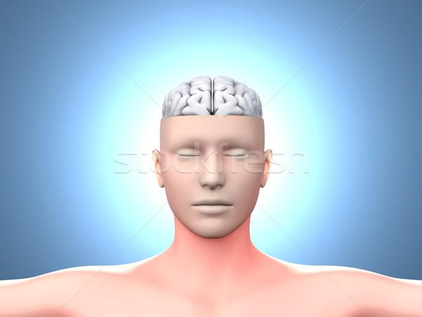 Cervello uomo cervello umano anatomica 3D reso Foto d'archivio © Spectral