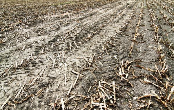Sequía muertos campo naturaleza tierra arena Foto stock © Spectral