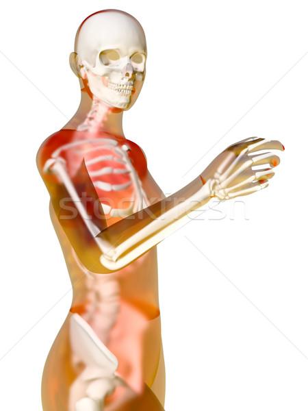Női anatómia 3d illusztráció izolált fehér test Stock fotó © Spectral