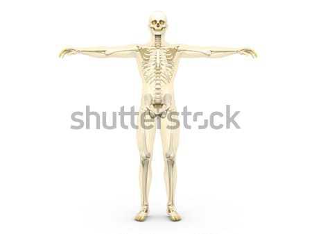 スケルトン 医療 人体解剖学 3D レンダリング 実例 ストックフォト © Spectral