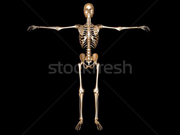 Esqueleto médico anatomia humana 3D prestados ilustração Foto stock © Spectral