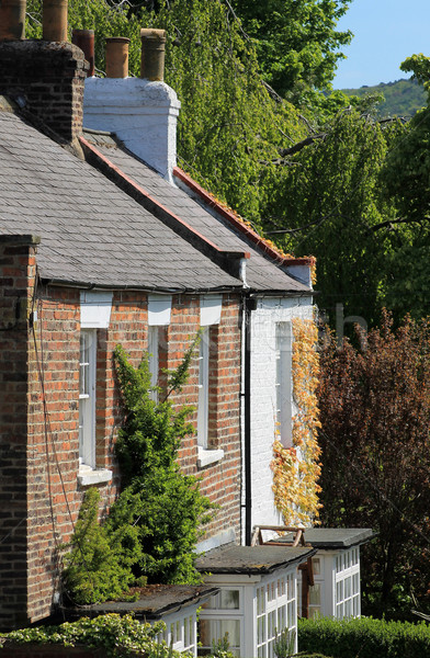 Klimop gedekt huis home platteland gebouw Stockfoto © speedfighter