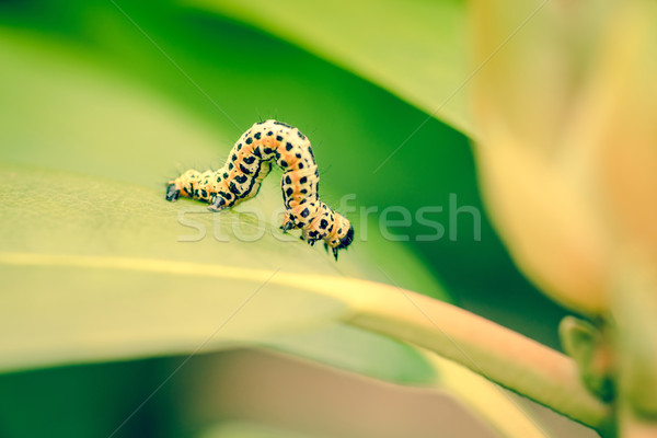 Ccaterpillar in the garden Stock photo © Sportactive