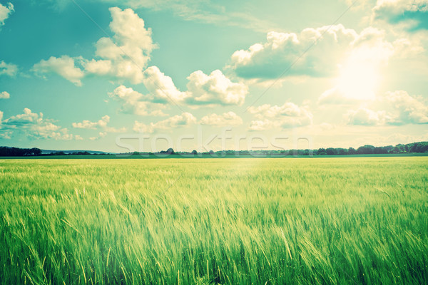 Countryside landscape with crops and sunshine Stock photo © Sportactive