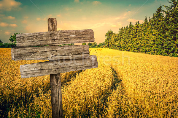 Golden crop field scenery Stock photo © Sportactive