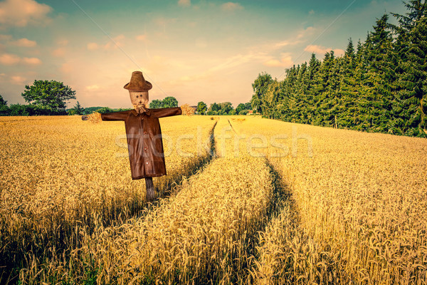 Scarecrow on a golden field Stock photo © Sportactive