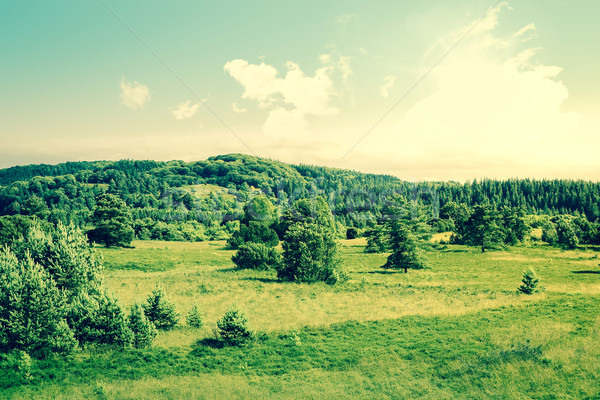 Countryside landscape with trees on a field Stock photo © Sportactive